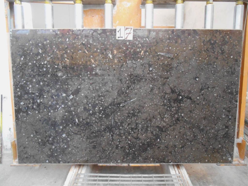 Fossil brown marble slabs